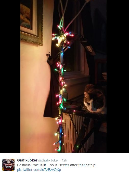 We know you don't normally put lights on a Festivus Pole, but the cat seems to love it and that's really all that matters.